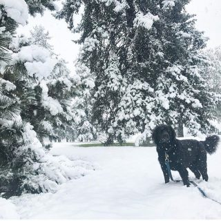 Our friends @megglebop and @daqueenakash woke up with some fresh snow this morning in Denver! ❄️ #comeeast #itwas78yesterday #snowdog #wilson